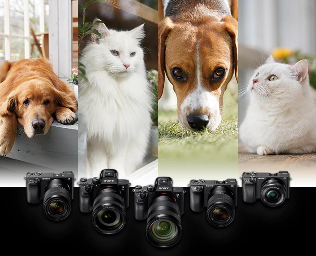 Máy ảnh kỹ thuật số được nhiều người ưa chuộng