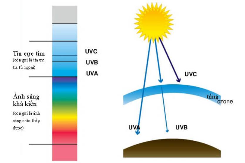 Tia UV có 3 loại