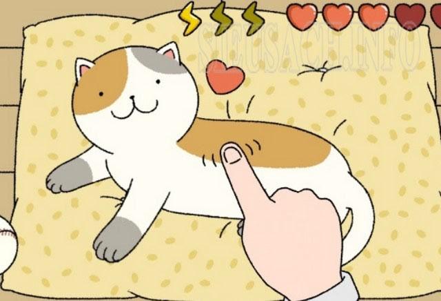 Chăm sóc mèo để lấy tim